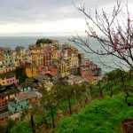 Manarola with cherry blossom