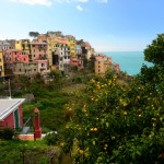 Lemon trees in Corniglia