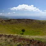 Tree in the Tere Vaka Volcano Summit Crater