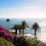 Flowers along the Funchal coast